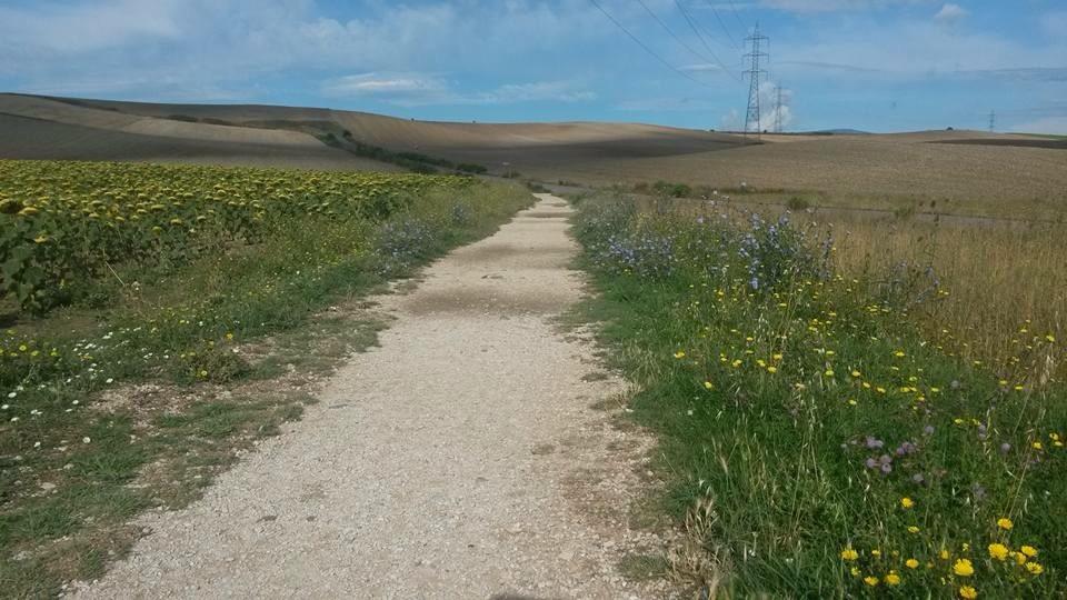 sentieri, Cammino di Santiago