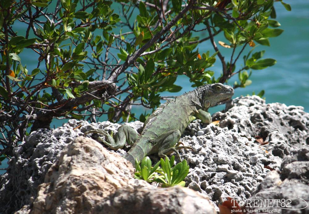 Iguana Miami beach