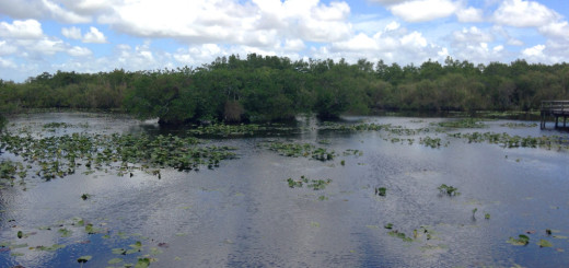 Anhinga trail everglades
