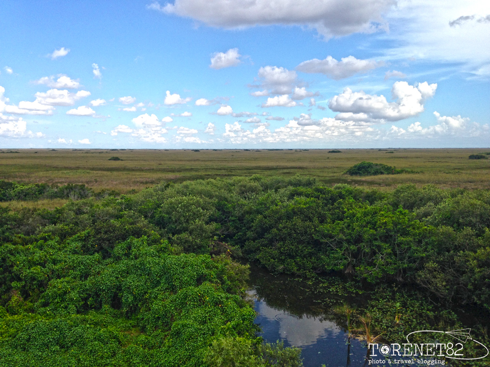 shark valley florida everglades
