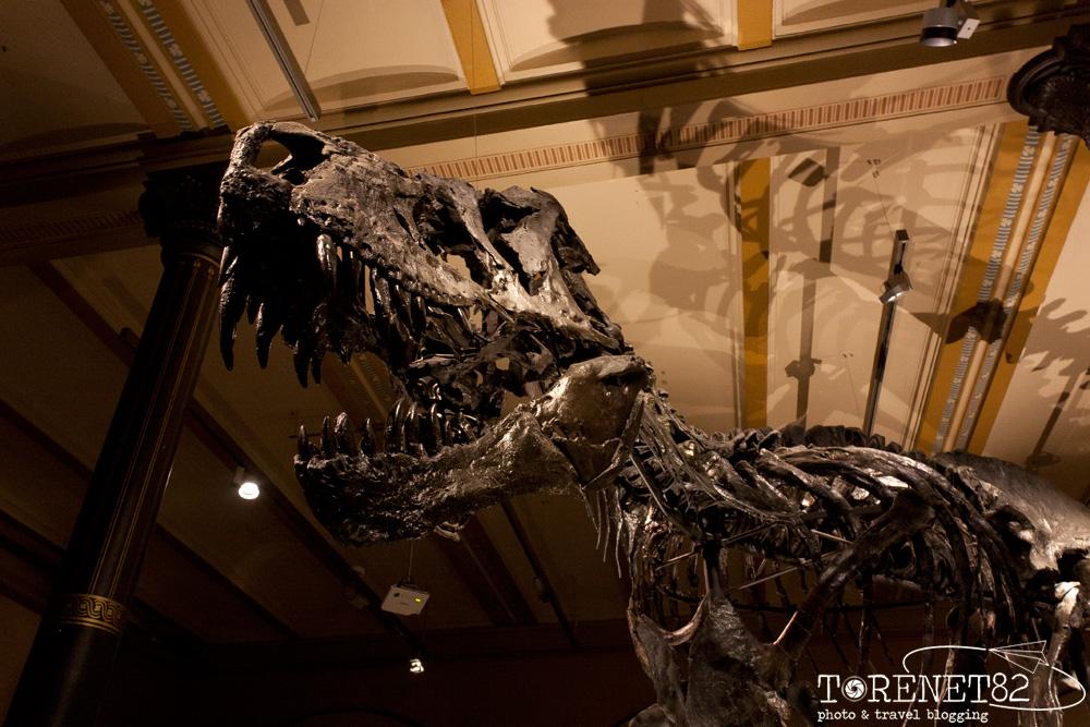 Museo di Storia Naturale musei di berlino