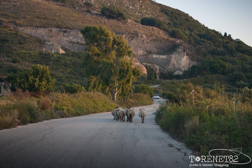 animali vacanza a cefalonia grecia